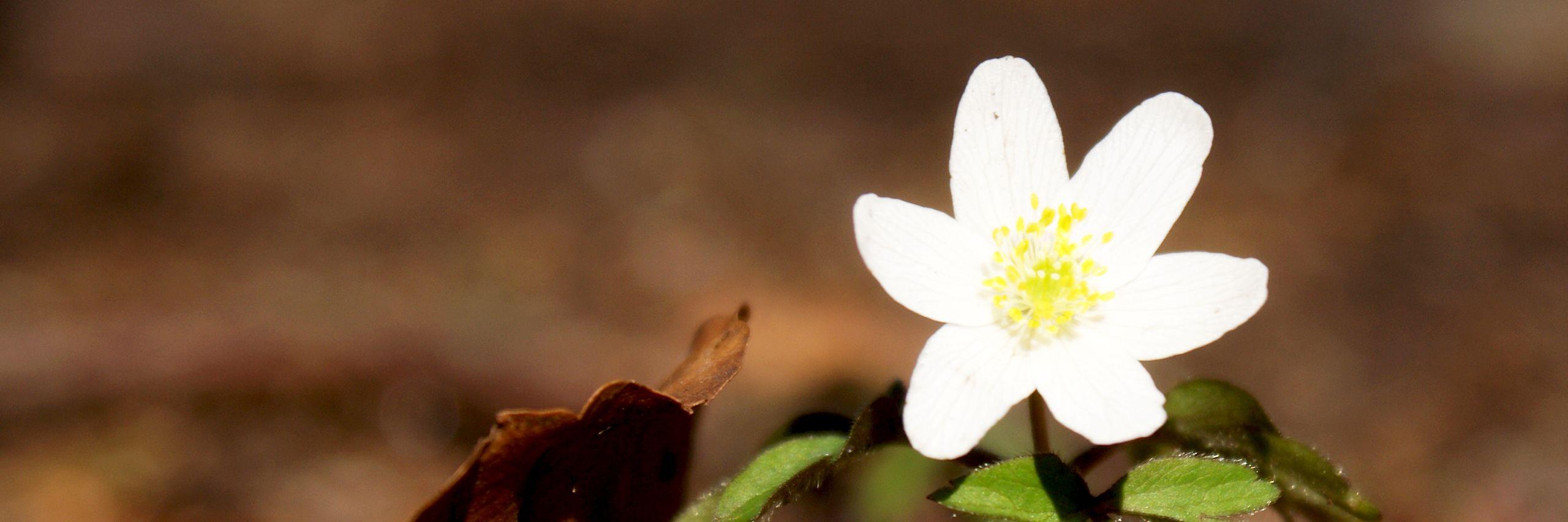 flower_w2560